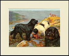NEWFOUNDLAND DOGS SAVE MAN FROM THE SEA GREAT DOG PRINT MOUNTED READY TO FRAME