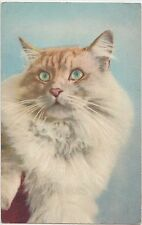 CAT Animal Postcard Feline Pet Stehli #93 Switzerland Print CUTE c2