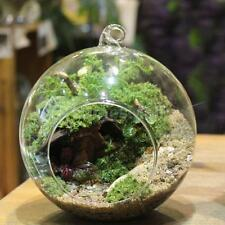 1pc Globe Ball Glass Hanging Plant Terrarium Flower Vase Fish Pot Wall Decor