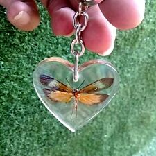 Butterfly Orange Real Genuine Keychain Pendant Clear Resin Insect Beetle Moth