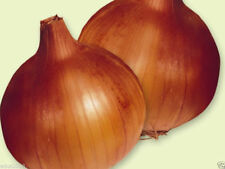 Australian brown onions  Seed (1000)Organic, Long Day-Plant Spring or fall !