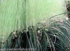90M x 3M Mesh 6CM  Green 3 Layer Fish Gill Sink Net Angling Tackle