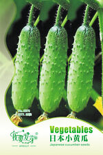 Japanese Cucumber Seed 25pcs/bag Mini Cucumber Vegetable Seed DIY Free Shipping