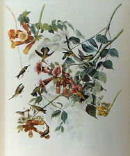 ANTIQUE 1937 AUDUBON PRINT - No. 47 RUBY THROATED HUMMINGBIRD - FREE SHIPPING !!