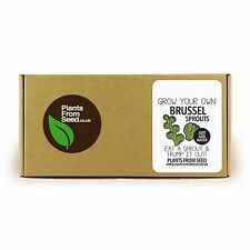Grow Your Own Brussel Sprouts Mini Plant Kit