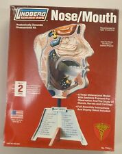 Lindberg 1/1 Life Size Nose & Mouth Anatomy Model Kit New