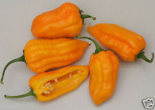 10 bonda man jacques pepper Seeds (Capsicum chinense) From Martinique,Very Rare