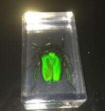 Handmade Scarab beetle green back real in acrylic paperweight Specimen Taxidermy
