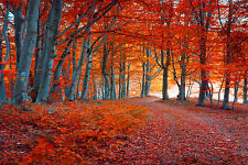 STUNNING AUTUMN FOREST CANVAS PICTURE #415 WALL HANGING ART A1