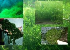 Unterwasserbüsche Set Wasserpflanzen besondere Dekoration für das Aquarium Dekos