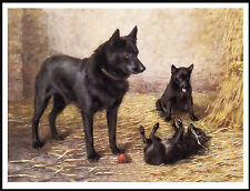SCHIPPERKE MOTHER AND PUPPIES CHARMING VINTAGE STYLE DOG PRINT POSTER