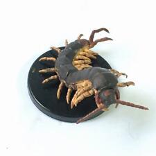 D&D Dungeons Pathfinder Giant Centipede Dungeons Deep #11 Miniature QA448