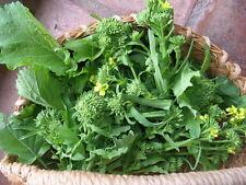 CAVOLI broccoli RABA vitamina ricca colture intercalari sementi a piastra in 50 giorni!! 300 semi