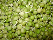 DRIED ORGANIC GREEN PEA/VATANA(4LBS),SOUP,FOOD STORAGE, SPROUTS, SPROUTING SEEDS