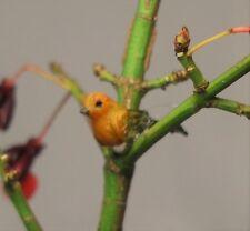 Doll house Miniatures One Finch Bird ,Garden