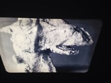 "Elizabeth Frink ""Horse's Head"" British Modern Sculpture 35mm Art Slide"