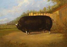Fine 19th Century English School Prize Black Pig Portrait Antique Oil Painting