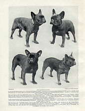 FRENCH BULLDOG FOUR NAMED DOGS NICE OLD ORIGINAL IMAGE 1934 PRINT PAGE