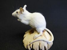 TAXIDERMY WHITE MOUSE (no.71) on carved cap of wooden mushroom.