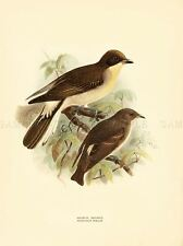 DRAWING BIRD ROWLEY KEULEMANS GREATER HONEYGUIDE ART PRINT LAH344A
