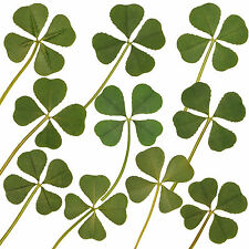 Wholesale 10pcs Genuine 4 Four Leaf Clover Irish Good Luck Wedding Favors Gift L