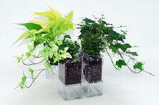 Transparent Self-watering pot Wall Planter Flowerpot-Wall Garden (one unit)