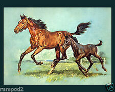 Vintage Picture/Fine Art Poster/Horse with foal/16x20 inches/Running Horses
