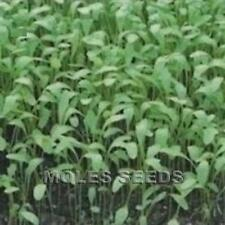 CRESS PLAIN COMMON PUNNET SEEDS READY IN 8/10 DAYS INDOORS 10grams freepost