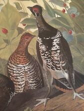 Spotted Spruce Grouse Audubon Bird Print Poster Picture Plate 119