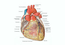 A4 Poster - Detailed Look at the Human Heart (Anatomy Surgery Picture Print Art)