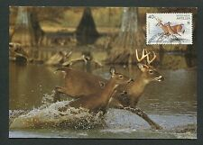 NEDERLANDSE ANTILLEN MK HIRSCH DEER WILD REH MAXIMUMKARTE MAXIMUM CARD MC d6298