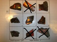 D Group Red Ammolite Ammonite Your Choice (Pick One) Ready to Make Jewelry
