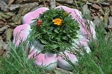 Mold for Concrete Decorative Flower Garden  Protection from grass
