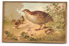 La Caille  - - Oiseau Animal Plumage Plume - - Chromo - Trade card