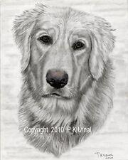 Dog Art,Pencil&Ink,Golden Retriever Print#3 By PK Ufnal