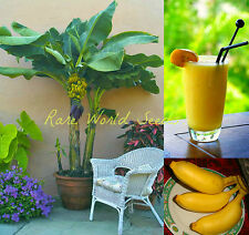 EDIBLE Banana TREE on your deck!!  'Dwarf Lady Finger' (Musa acuminata)  seeds.