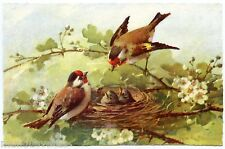 CATHERINA KLEIN. MAGNIFIQUES CHARDONNERETS. GOLDFINCH. NID. NEST. OISEAUX BIRDS
