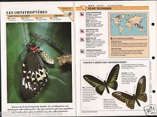 Ornithoptera Troide Papilioninae Birdwing Butterflies Insect FICHE FRANCE
