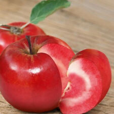 10pcs Red Fresh Seeds Red Delicious Apple Tree Starking Variety Apple Tree