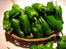 PADRON PEPPERS - Pimientos de Padron – Spanish Roullette Packet / 50 Seeds
