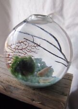 Marimo Aquarium Kit, Nano, Zen Japanese Aquarium Kit, fresh water, easy care