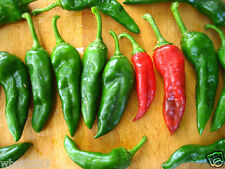 25 Chimayo peppers Chili Pepper (Capsicum annuum)Great in container