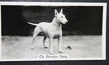 ENGLISH BULL TERRIER   Vintage 1930's Crufts Show Champion  Original Photo Card