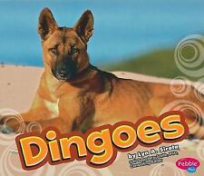 Australian Animals: Dingoes by Lyn A. Sirota (2010, Hardcover)