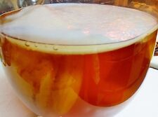 Live ORGANIC Kombucha FRESH 4in Scoby MUSHROOM CULTURE 1/2c STRONG STARTER TEA