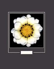Harold Feinstein Reverie Poster Kunstdruck Bild 50x40cm - Kostenloser Versand