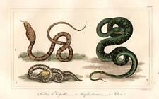 Cobra serpiente Original 1821 impresión de color mano Antiguo Buffon reptil Grabado