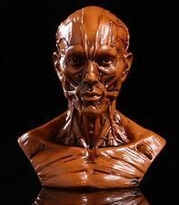 "4"" Human Model Anatomy Skull Head Muscle Bone Medical Drawing Class Brown"