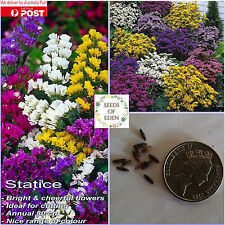 25 STATICE 'SPECIAL MIXED' Seeds(Limonium sinuata); Idea for pots and borders