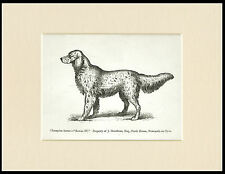 ENGLISH SETTER NAMED DOG 1890's ANTIQUE DOG PRINT MOUNTED READY TO FRAME
